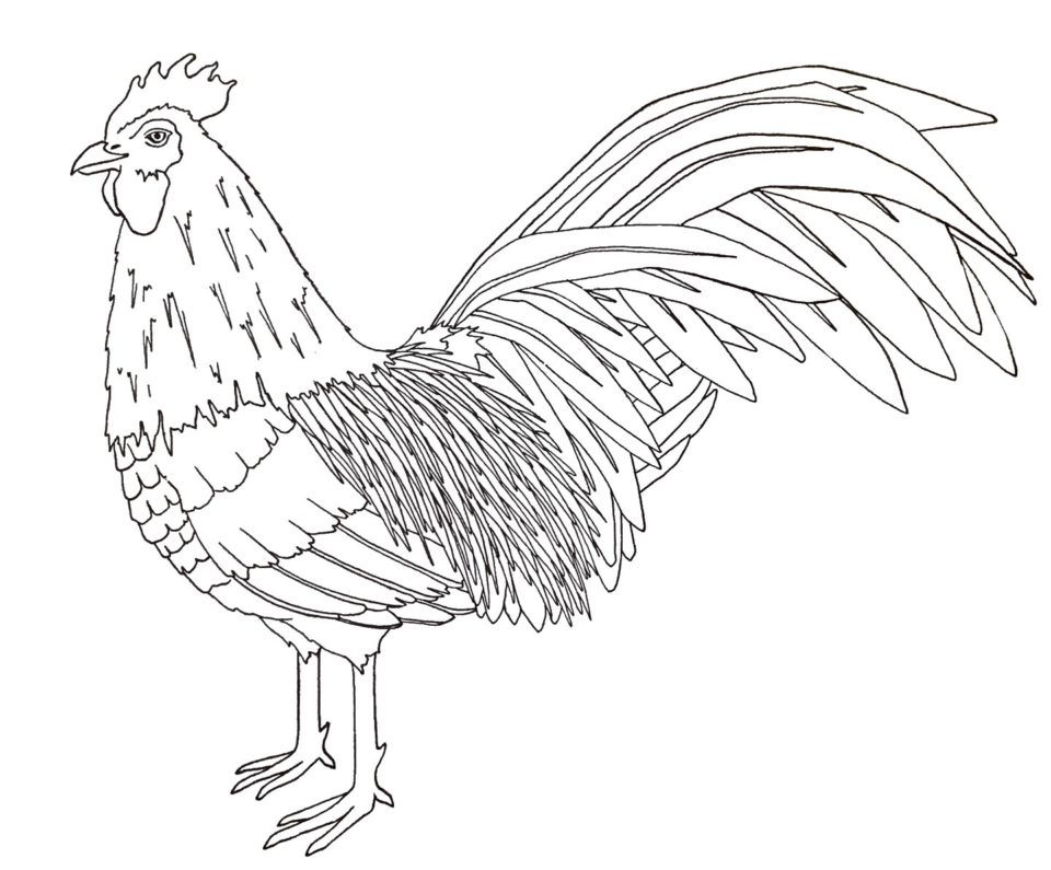 Year of the rooster – twineandtable