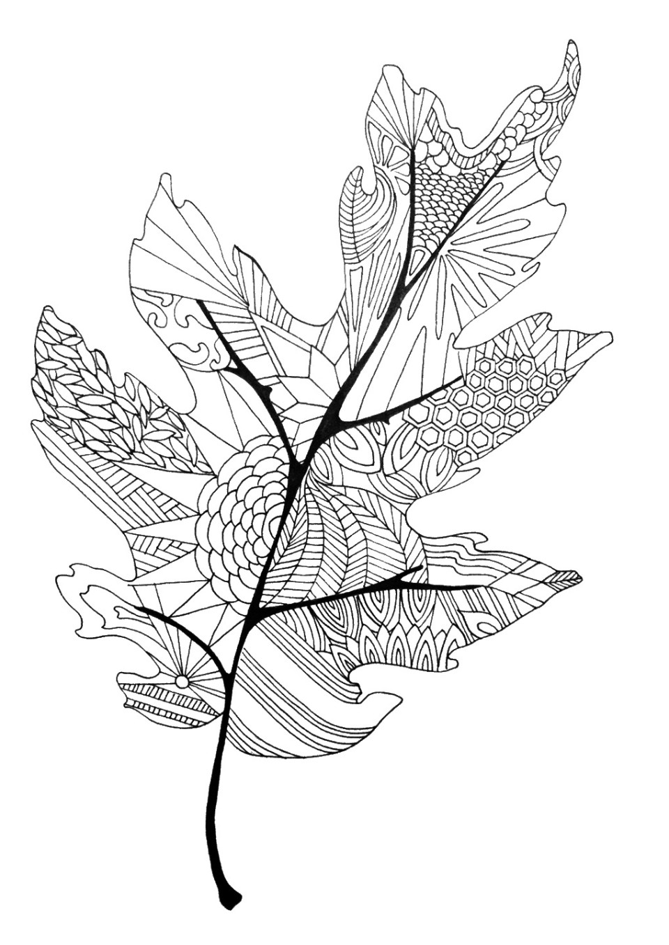 It is a photo of Critical Fall Leaf Coloring Pages